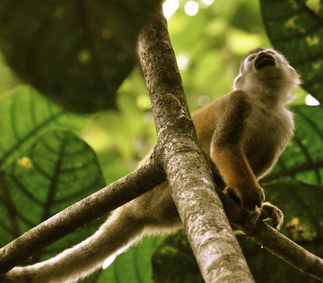 Khách sạn Finca Bellavista ở Costa Rica – một nơi đáng để đặt chân một lần trong đời