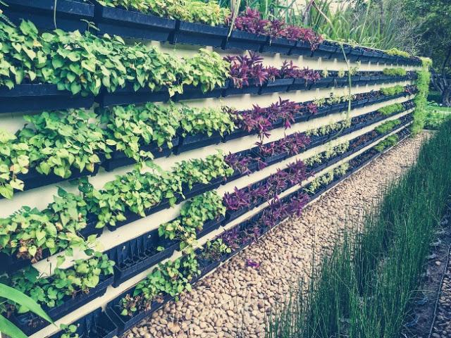 Ý tưởng tự thiết kế khu vườn trong nhà